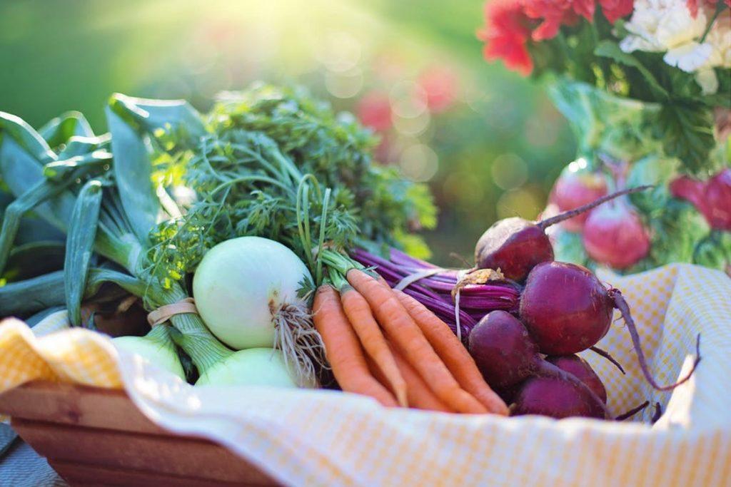 Exquisite Fruits   Exportación de frutas y verduras