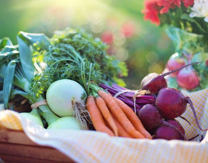 Exquisite Fruits | Exportación de frutas y verduras