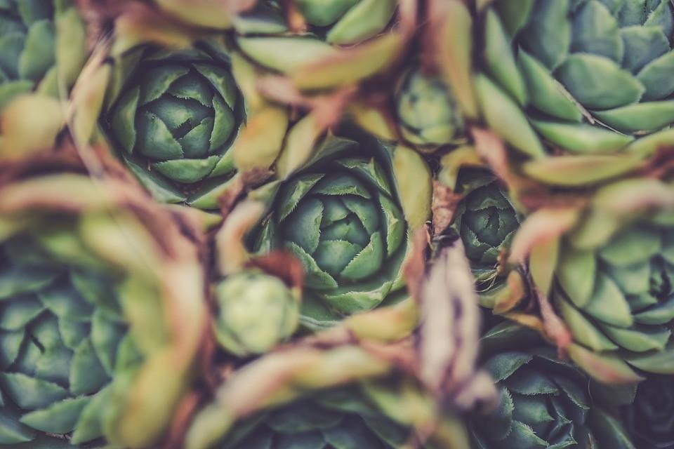 Los beneficios de la alcachofa