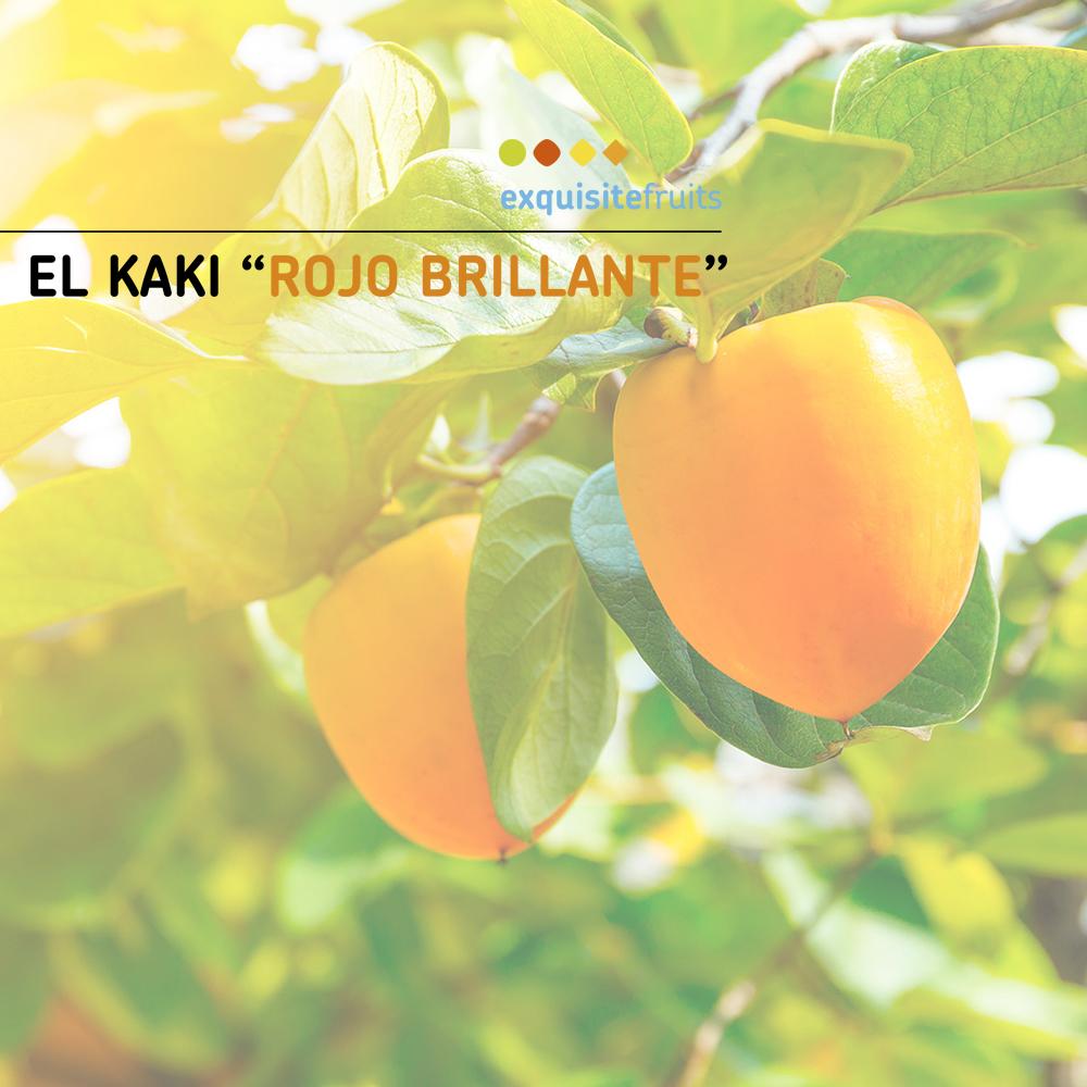 Catálogo de Kakis 2021 | Exquisite Fruits