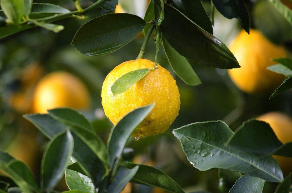 El limón, un alimento con súper poderes…